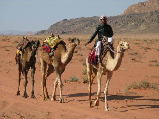 Image result for Bedouin